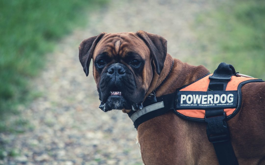 Service Animals, Emotional Support Animals and Pet-Friendly Apartments